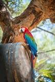 Perroquet coloré Images stock