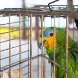 Perroquet derrière la barrière photos stock