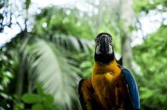 Perroquet coloré en nature photos stock