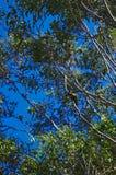 Perroquet coloré entre des branches d'arbre photos libres de droits