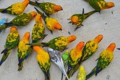 Perroquet color? en parc photos libres de droits