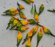 Perroquet color? en parc photographie stock libre de droits