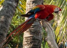 Perroquet dans la jungle Images libres de droits