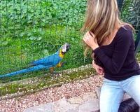 Perroquet dans le zoo image stock