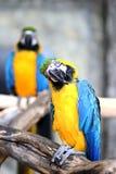 Perroquet dans un zoo Images libres de droits