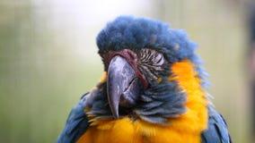 Perroquet de sommeil Images libres de droits