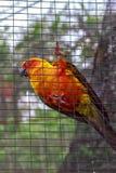 Perroquet derrière la barrière image stock