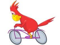 Perroquet drôle. Cycliste. illustration stock