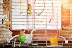 Perroquet drôle de perruche à la grande cage sur le rooom avec le soleil Photos stock