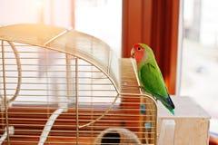 Perroquet drôle de perruche à la grande cage sur le rooom avec le soleil Photos libres de droits