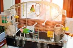 Perroquet drôle de perruche à la grande cage sur le rooom avec le soleil Photographie stock