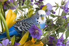 Perroquet et fleur Photos libres de droits