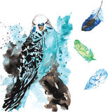 Perroquet et plumes tirés par la main d'aquarelle Images stock