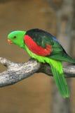Perroquet exotique vert image libre de droits