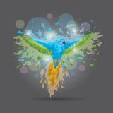 Perroquet facetté Photographie stock libre de droits