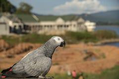 Perroquet haut étroit d'oiseau de macore sur le fond brouillé photo libre de droits