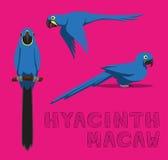 Perroquet Hyacinth Macaw Cartoon Vector Illustration Image libre de droits