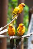 Perroquet jaune ou ara rouge et vert en parc Photos libres de droits