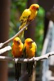 Perroquet jaune ou ara rouge et vert en parc Photo libre de droits
