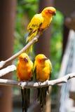 Perroquet jaune ou ara rouge et vert en parc Image libre de droits