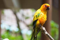 Perroquet jaune ou ara rouge et vert en parc Photos stock