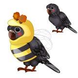 Perroquet noir mignon dans le costume d'abeille d'isolement sur un fond blanc Oiseau apprivoisé tropical Illustration animée de v illustration libre de droits