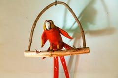 Perroquet rouge décoratif accrochant dans un mur Photo stock