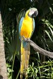 Perroquet sauvage Photo stock