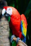 Perroquet sur l'arbre Photo stock