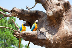 Perroquet sur un arbre Image libre de droits