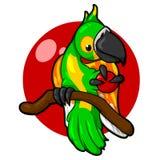 Perroquet vert avec un fond rouge, oiseau, tropiques Photos stock