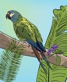 Perroquet vert d'ara sur la branche Image libre de droits