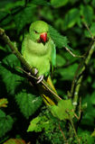 Perroquet vert sur la branche image libre de droits