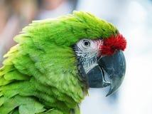 Perroquet vert sur le fond brouillé Photographie stock libre de droits