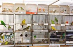 Perroquets à vendre photos stock