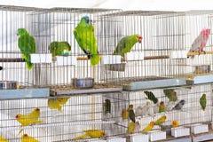 Perroquets à vendre photographie stock