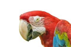 Perroquets équatoriens au zoo, Guayaquil, Equateur image stock