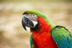 Perroquets photo libre de droits
