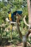 Perroquets Images libres de droits