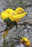 Perroquets Image stock