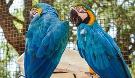 Perroquets au zoo Images libres de droits