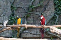 Perroquets au zoo de Minsk photo libre de droits