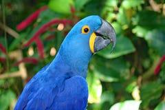 Perroquets aux jardins déprimés dans Galveston Images libres de droits