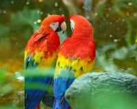 Perroquets aux jardins déprimés dans Galveston Photo stock