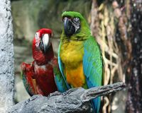 Perroquets aux jardins déprimés dans Galveston images stock