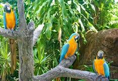 Perroquets aux jardins déprimés dans Galveston Image stock