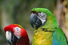 Perroquets aux jardins déprimés dans Galveston Photographie stock