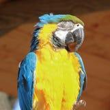 Perroquets colorés Images libres de droits