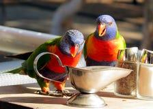 Perroquets colorés buvant d'un pot image libre de droits