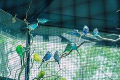 Perroquets colorés dans la cage photographie stock